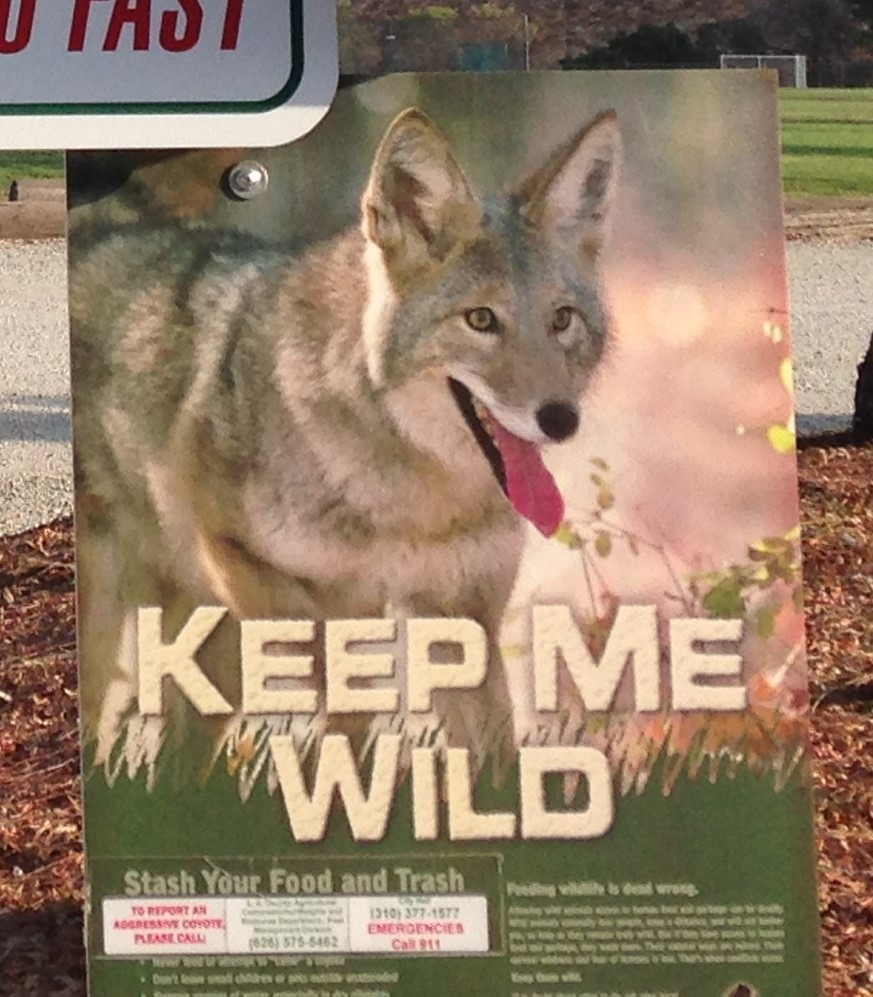 Coyote Notice- sign at park